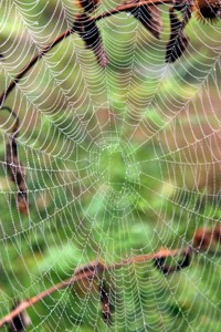 spider web photo