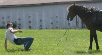 horse training photo