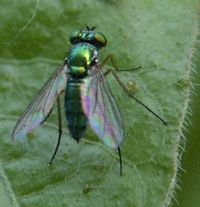 Fly, Green Small 1