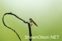Fly on Branch