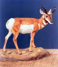 Pronghorn Sculpt