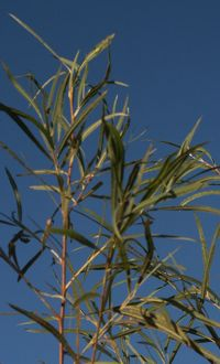 tall grass picture