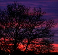 vibrant sunset colors through tree