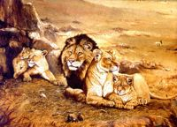 Oil painting of lions by Donald Olson.