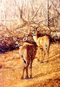 White Tails Snow