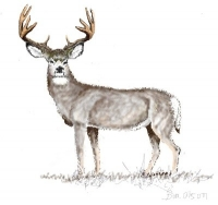 digital mule deer painting